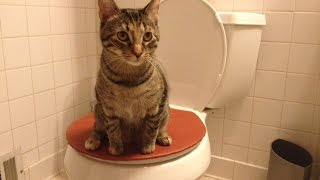 The Purrfect Potty, the best cat toilet seat!