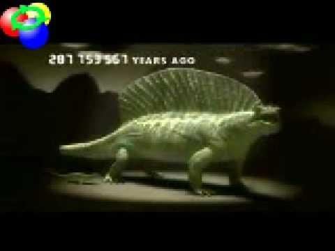 Vertebrate Evolution
