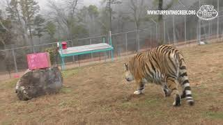Shasta's Birthday Enrichment