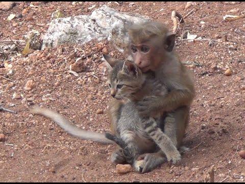 Baby Monkey &  cat !