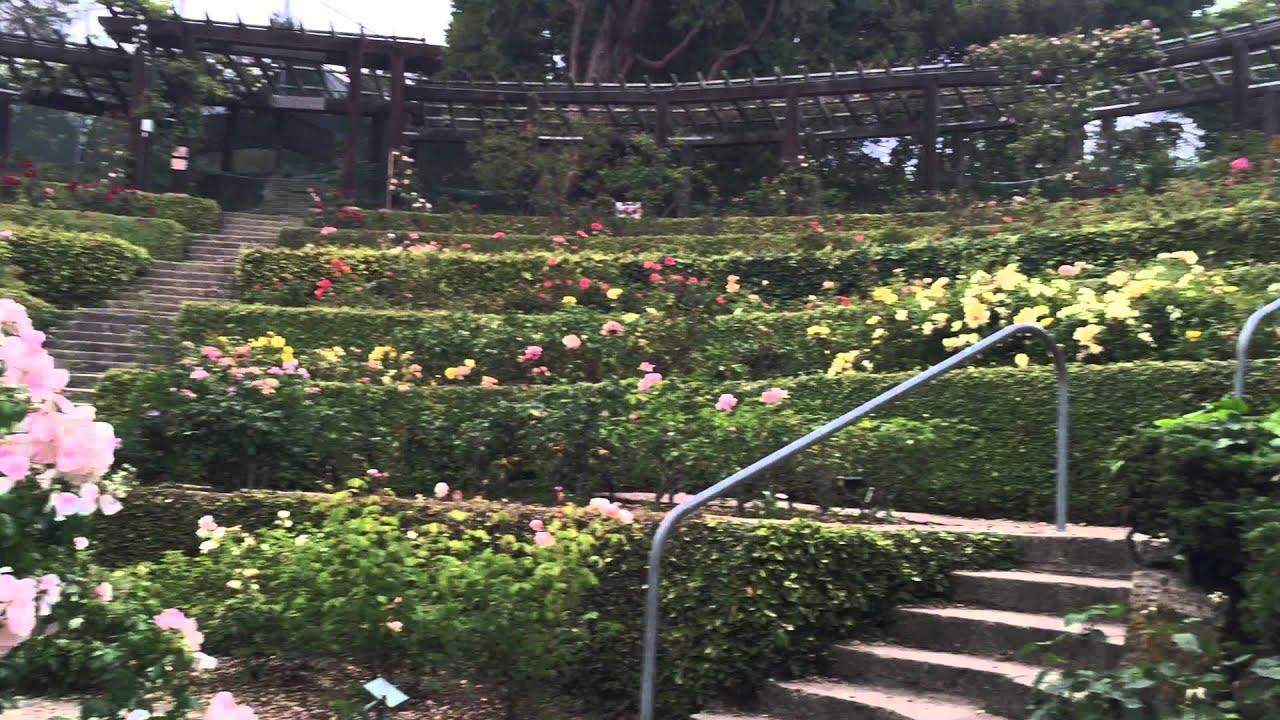north berkeley rose garden - Berkeley Rose Garden