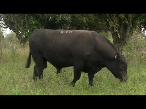 LOTE 27 - TAT 918 - ZAMBEZE