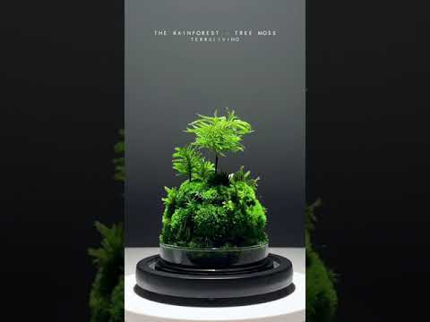 The Rainforest - Tree Moss, a Botanical Collection, Preserved Moss Terrarium by TerraLiving