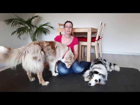 Hundetraining: Unerwünschtes Verhalten Korrigieren | Was Tun, Wenn Hund Fehlverhalten Zeigt?