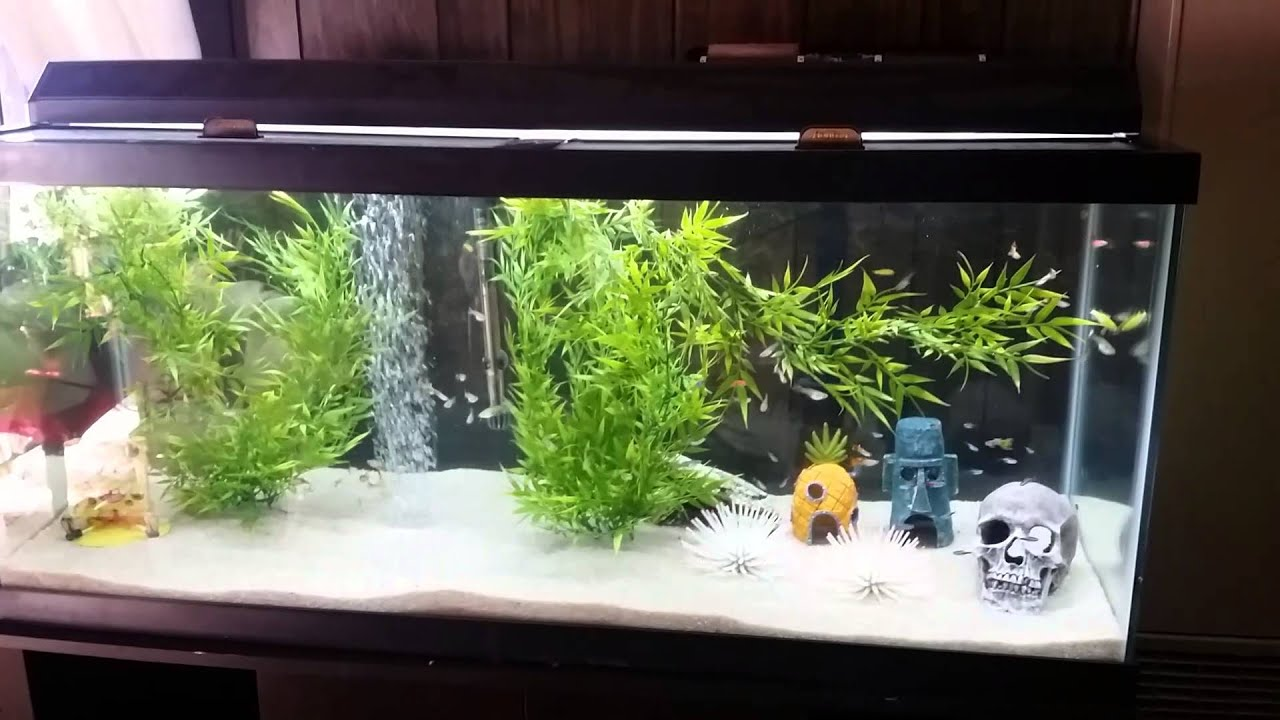 75 gallon guppy neon tetra glowfish aquarium youtube for Neon aquarium