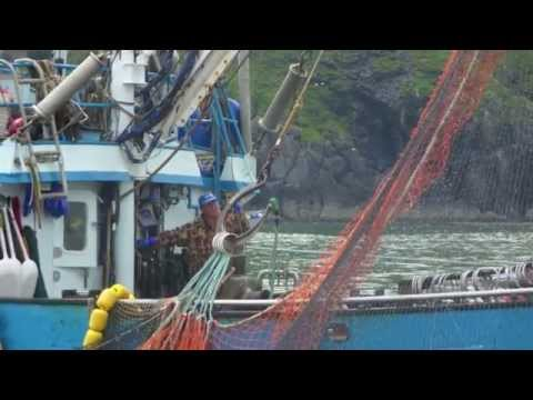 deadliest catch (salmon) commercial fishing