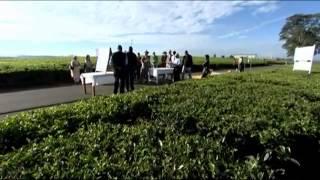 Kenya tea devlopment agency
