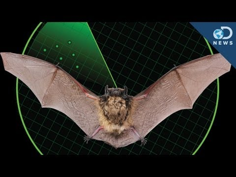 Animalist & DNews: The Amazing Connection Between Bats And D