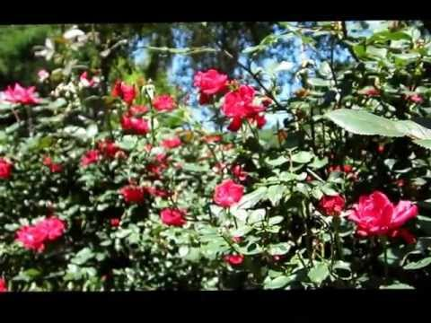 The Scented Garden VIDEO Saved For PC