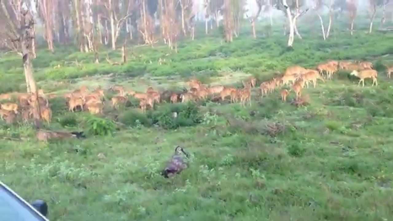 Safari tour in a Tiger Reserve - India: Bandipur National Park - 2015