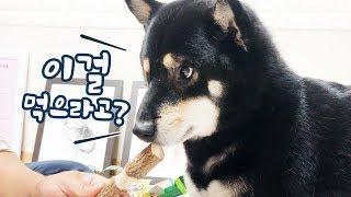 Japanese Pet Product Haul [Shibainu Gom& Taeng]