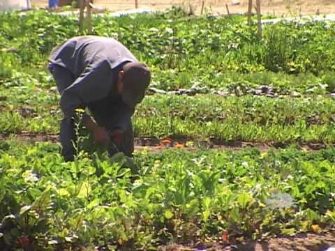 Sage Mountain Farms & Seeds of Change - VNN