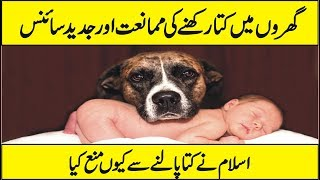 Latest Scientific Research On Dog   Why Are Dogs As Pets Considered Haram Urdu Hindi