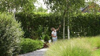 Sierpień w ogrodzie. Kalendarz ogrodnika na 12.08 - 18.08. Prace ogrodnicze w sierpniu