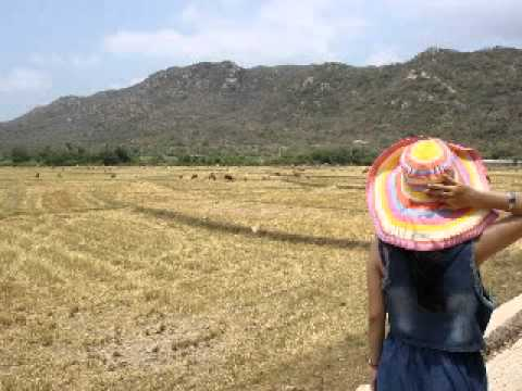 Fields of gold - Emi Fujita