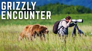 Close Encounter With A Wild Grizzly Bear