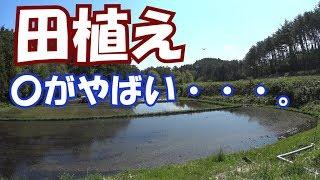 ブログ→http://mark886.blog.fc2.com/ #イセキ #田植え #さなえちゃ...