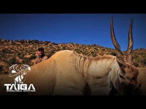 Huge Eland!!! Plains Game Safari Hunt!