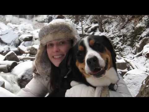 Murphy: Greater Swiss Mountain Dog
