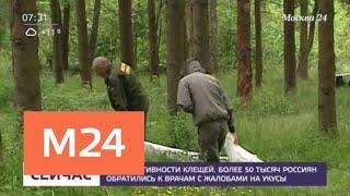 Смотреть видео Более 50 тысяч россиян обратились к врачам после укусов клещей - Москва 24 онлайн