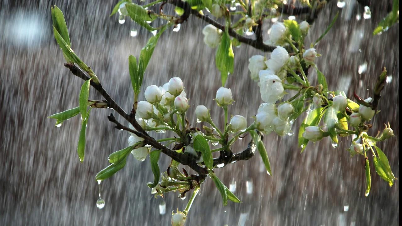 Картинки по запросу spring  rain