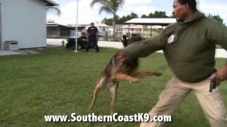 Police Dog Training. This Awesome K9's Got It Right!  | Florida K9 Training School