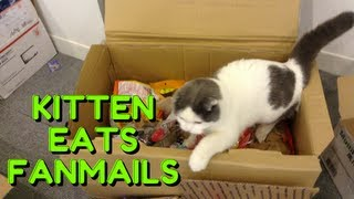 LiveChat and Fanmail Opening!