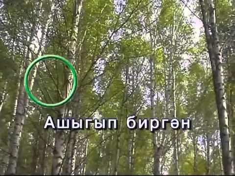 Шубино видео