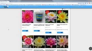 видео Купить лилии в интернет-магазине