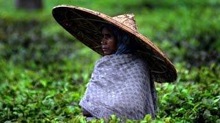 Folk song from the Assam tea gardens | Cha Bagicha | Zolani club