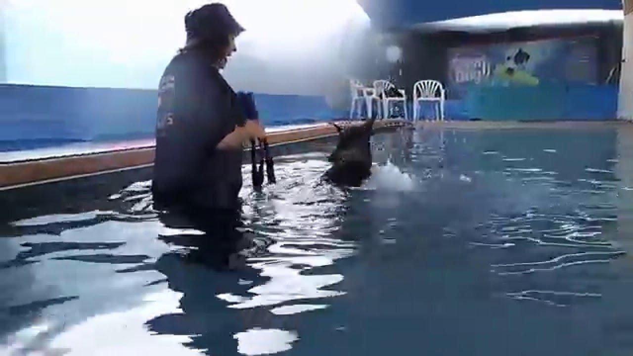 Service Dog Doberman Ruffian Does Tricks In Swimming Pool Too Cute Youtube