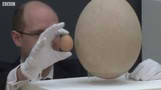 Giant egg from extinct elephant bird up for auction