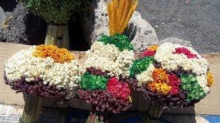 Download Video Bunga Edelweis di Gunung Bromo MP3 3GP MP4