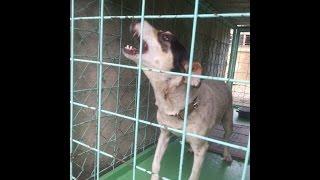 Кормящая собака плачет о щенках