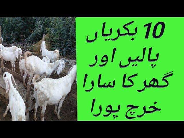 Goat Farming Ki Feasibility
