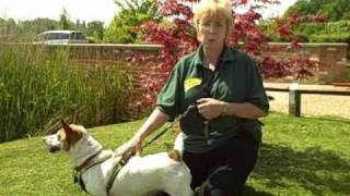 Dogs Trust West London: Adelaide Goes Swimming!