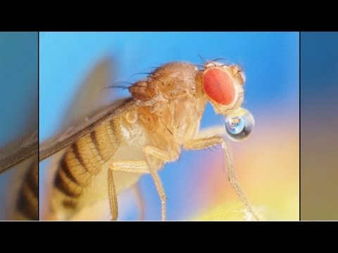 Fruit Flies and the Smell Sense: How a Molecule's Vibration Can Change Its Smell