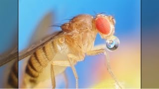Fruit Flies and the Smell Sense: How a Molecule