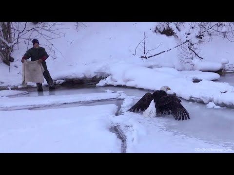 Iced Eagle Rescue on Lake Michigan