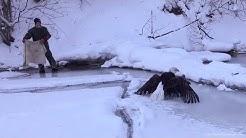 Iced Eagle Rescue on Lake Michigan