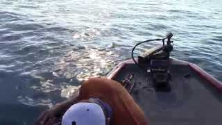Amazing Lake St. Clair Smallmouth Fishing