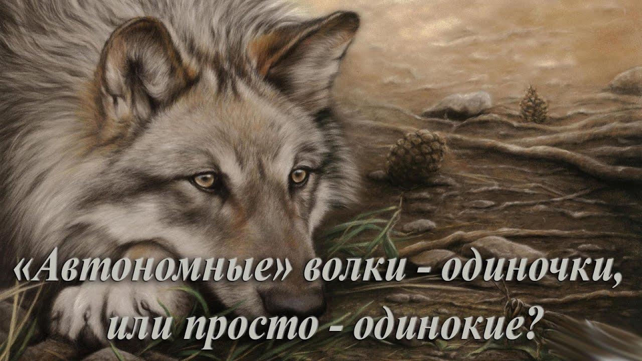 картинки влюбленные волки