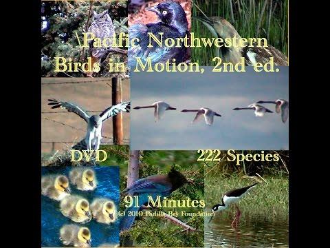 Pacific Northwestern Birds in Motion - 2010