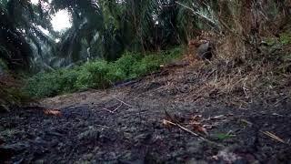 Video Pikat ayam hutan betina..Sari tapau ke 6 download MP3, 3GP, MP4, WEBM, AVI, FLV Juli 2018
