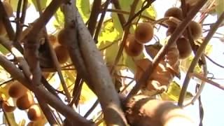 видео знакомства в ужгороде