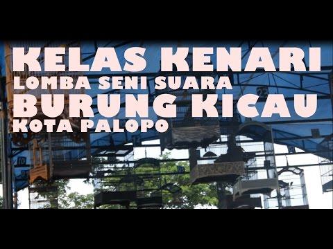 Download Lagu KELAS KENARI - Lomba Seni Suara Burung Kicau Kota Palopo