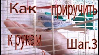 Разговорный жанр для попугая программу