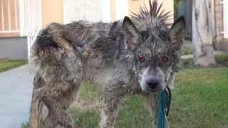 10 Scariest Hybrid Animals That Actually Exist!