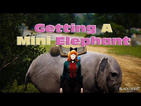 BDO  Getting A Mini Elephant  Quest Guide 2018