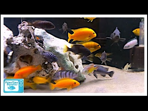 How to Maintain a Fish Tank with Sand